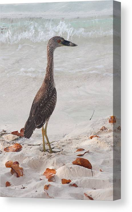 Tropical Canvas Print featuring the photograph Pose Off by Jared Shomo