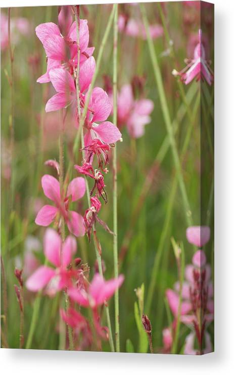 Canvas Print featuring the photograph Pretty In Pink by Joe Bledsoe