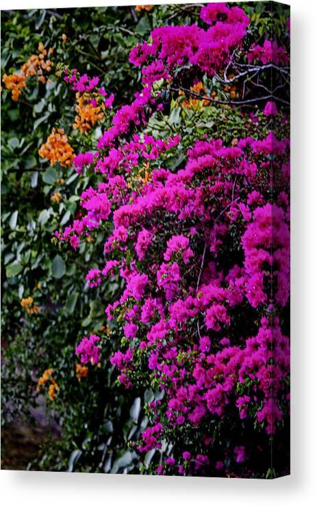 Colors Canvas Print featuring the photograph Purple Contrast by Douglas Barnard