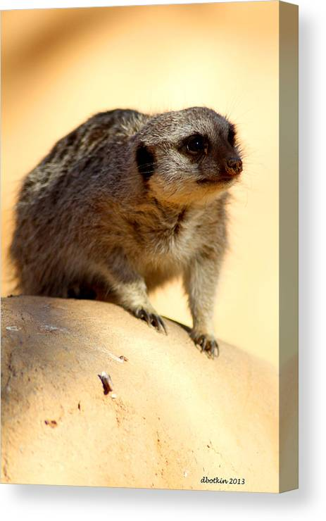 Zoo Canvas Print featuring the photograph Ready Set Go by Dick Botkin