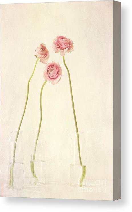 Still Life Canvas Print featuring the photograph Renoncules by Priska Wettstein
