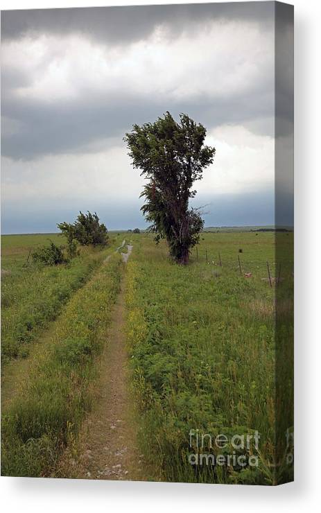 Flint Hills Canvas Print featuring the photograph Road Less Traveled by Betty Morgan