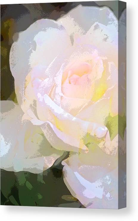 Floral Canvas Print featuring the photograph Rose 254 by Pamela Cooper