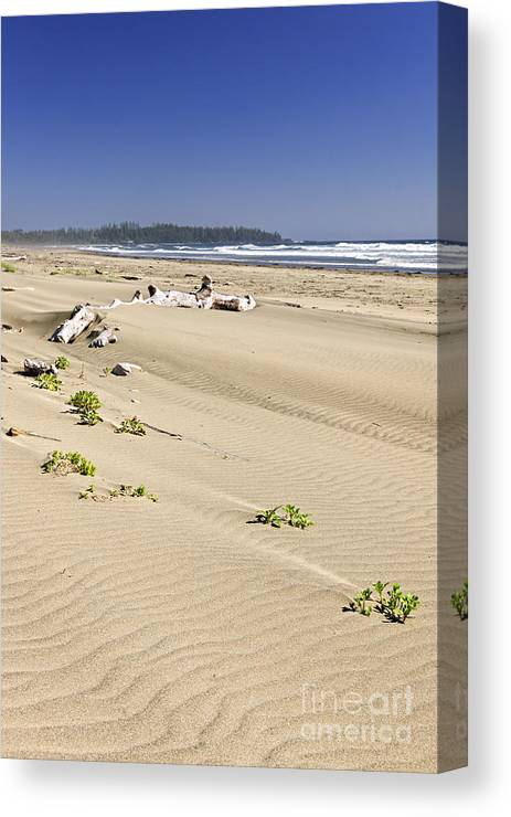 Pacific Canvas Print featuring the photograph Sandy Beach On Pacific Ocean In Canada by Elena Elisseeva