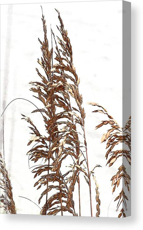 Floral Canvas Print featuring the photograph Sea Oats by Jonah Gibson