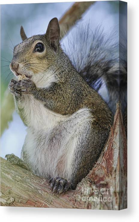 Squirrel Canvas Print featuring the photograph Snack Time by Deborah Benoit