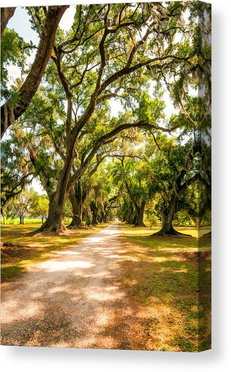 Evergreen Plantation Canvas Print featuring the photograph Southern Lane 2 by Steve Harrington