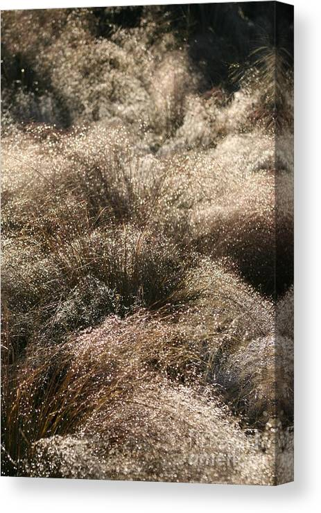 Grasses Canvas Print featuring the photograph Sparkling Grasses by Nadine Rippelmeyer
