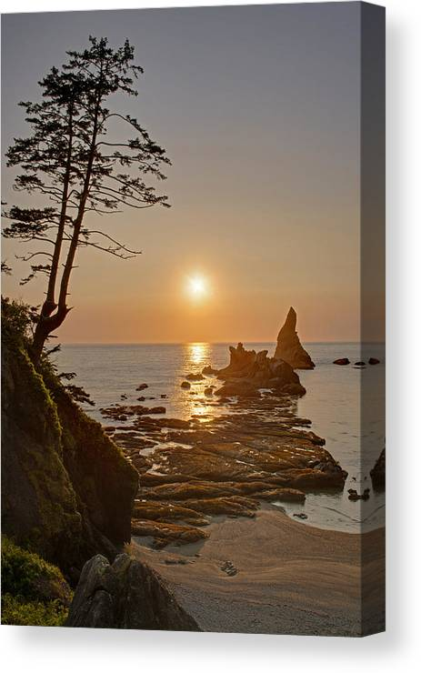 Coast Canvas Print featuring the photograph Sunset De Agave by Mike Reid