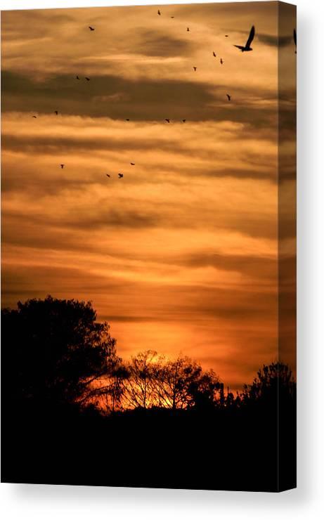 Dusk Canvas Print featuring the photograph The Birds Still Fly by Christy Usilton