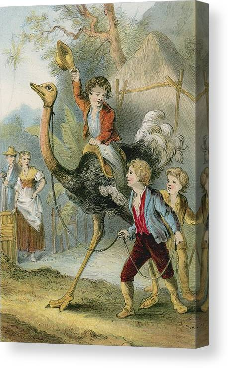 Swiss Family Robinson Canvas Print featuring the photograph Training The Ostrich by English School