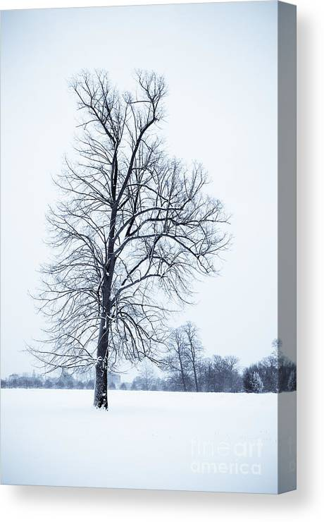 B&w Canvas Print featuring the photograph Tree In Snow by Lana Enderle