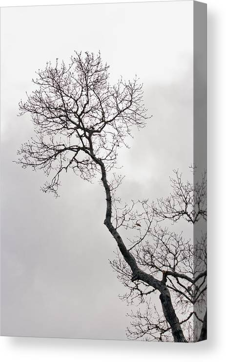 Tree Canvas Print featuring the photograph Tree Limb 2 by Dennis Coates