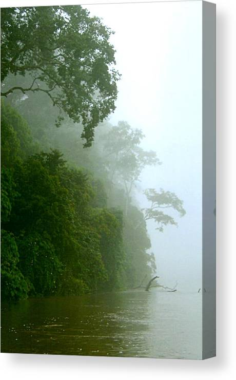 Camaroon Canvas Print featuring the photograph Trees Along The Boumba River by Jim Phares