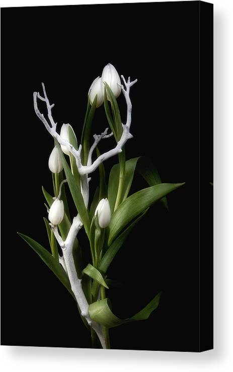 Arrangement Canvas Print featuring the photograph Tulips In Tree Branch Still Life by Tom Mc Nemar