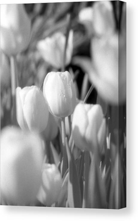 Tulip Canvas Print featuring the photograph Tulips - Infrared 10 by Pamela Critchlow