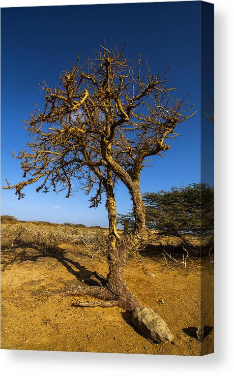 Nature Canvas Print featuring the photograph Twisted Tree by Jess Kraft
