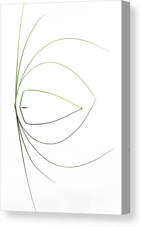 Grass Canvas Print featuring the photograph Untitled by Dirk Heckmann