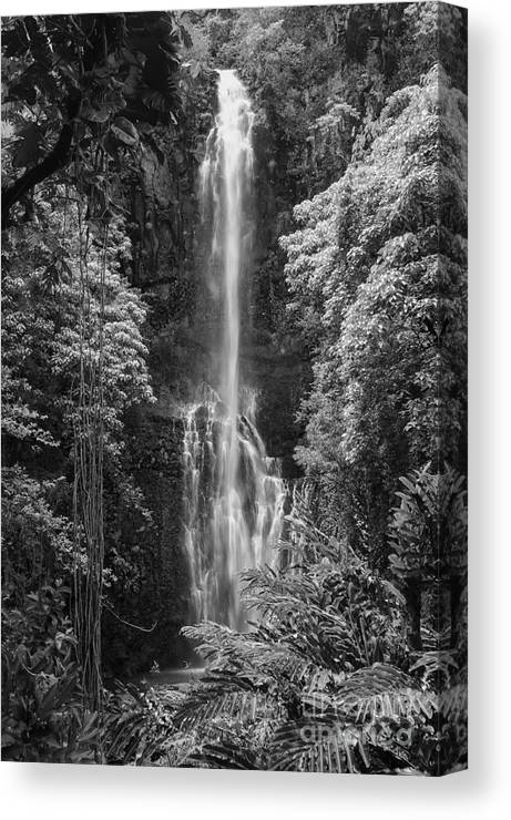 Wailua Falls Road To Hana Maui Hawaii Waterfall Waterfalls Water Landscape Landscapes Tree Trees Vine Vines Fern Ferns Nature Waterscape Waterscapes Black And White Canvas Print featuring the photograph Wailua Falls 2 by Bob Phillips