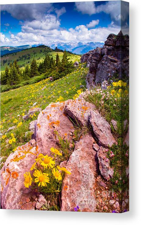 Landscape Canvas Print featuring the photograph Wildflowers And Pink Rocks by Peter Castricone