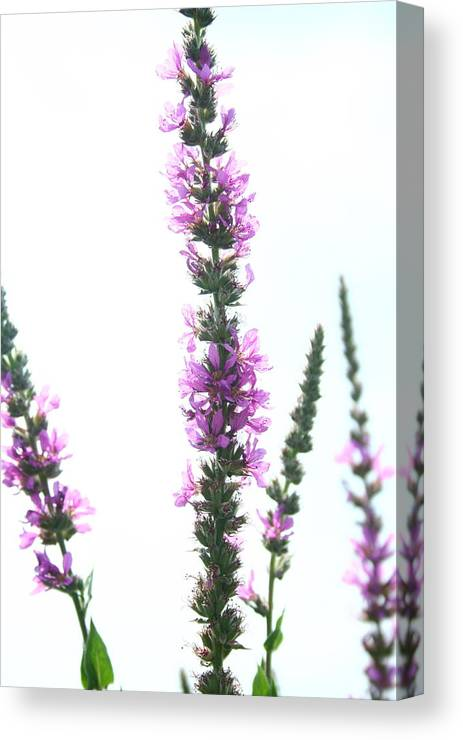 Wildflower Canvas Print featuring the photograph Wildflowers by Andrea Barnett