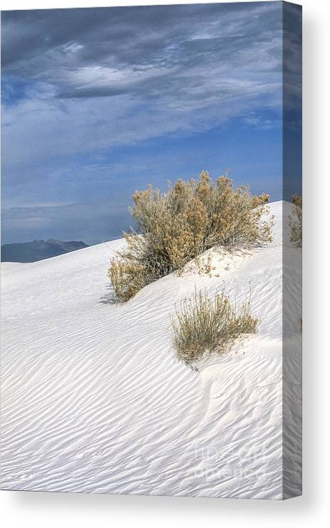 Southwest Canvas Print featuring the photograph Windswept - White Sands National Monument by Sandra Bronstein