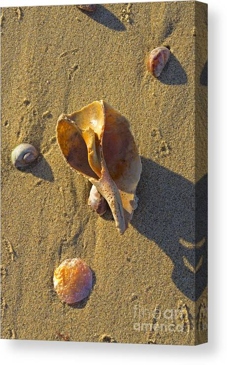 Shell Canvas Print featuring the photograph Winter Beach by Joe Geraci