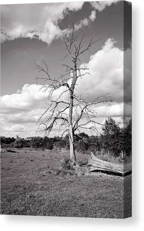 Bare Canvas Print featuring the photograph Bare by Kelley Nelson