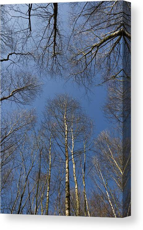 Tree Canvas Print featuring the photograph Trees In Epping Forest by David Pyatt