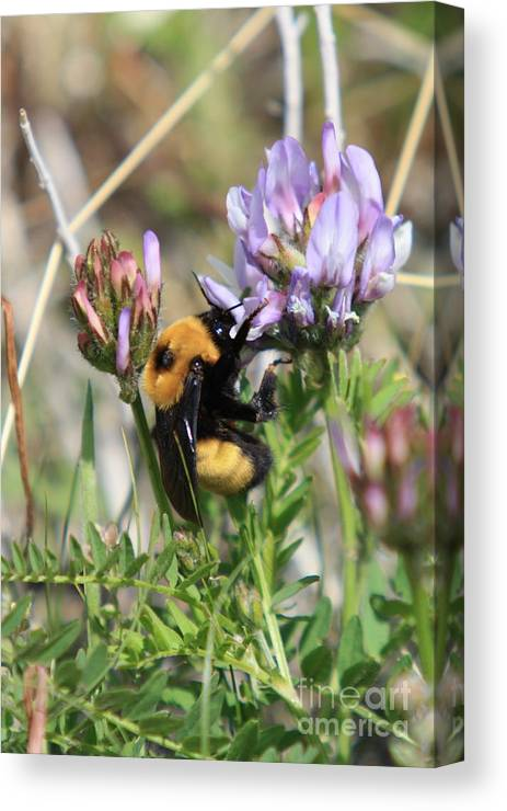 Yellowstone Wildflowers Canvas Print featuring the photograph All Work And No Play by Kurt Holtzen