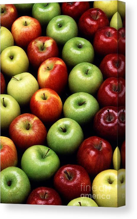 Apple Canvas Print featuring the photograph Apples by Photo Researchers