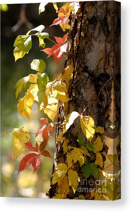 Autumn Canvas Print featuring the photograph Autumn Colors by Living Color Photography Lorraine Lynch