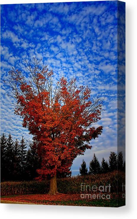 Sky Canvas Print featuring the photograph Autumn Sky Drama by Cathy Beharriell