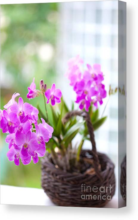 Backgrounds Canvas Print featuring the photograph Basket Of Orchids by Juriah Mosin