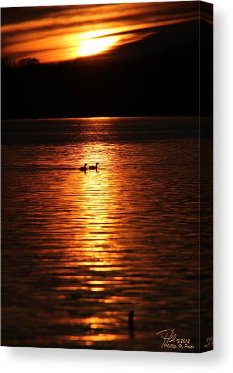 Coots Canvas Print featuring the photograph Coots In The Sunset by Ericamaxine Price