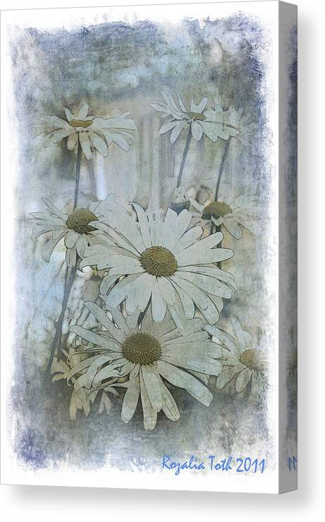 Daisy Canvas Print featuring the photograph Daisy Blues by Rozalia Toth