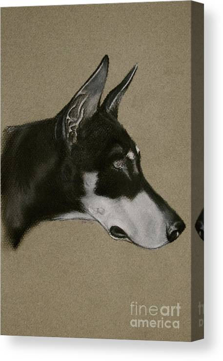 Dobe Canvas Print featuring the drawing Doberman by Susan Herber