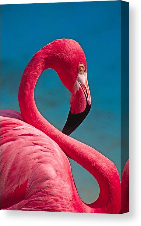 Flamingo Canvas Print featuring the photograph Flexible Flamingo by Michele Burgess