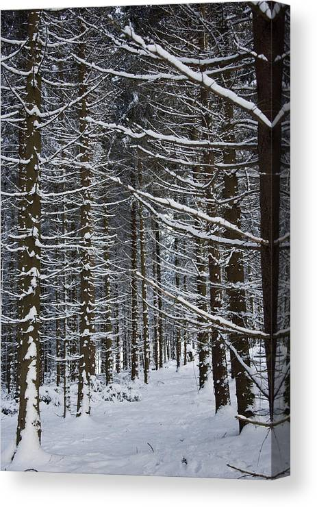 Marburg Canvas Print featuring the photograph Forest Of Marburg In Winter by Axiom Photographic