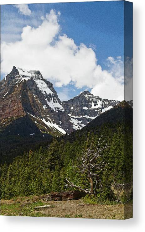 Canvas Print featuring the photograph Going To The Sun Mountain Glacier National Park Spring Tree Larry Darnell by Larry Darnell