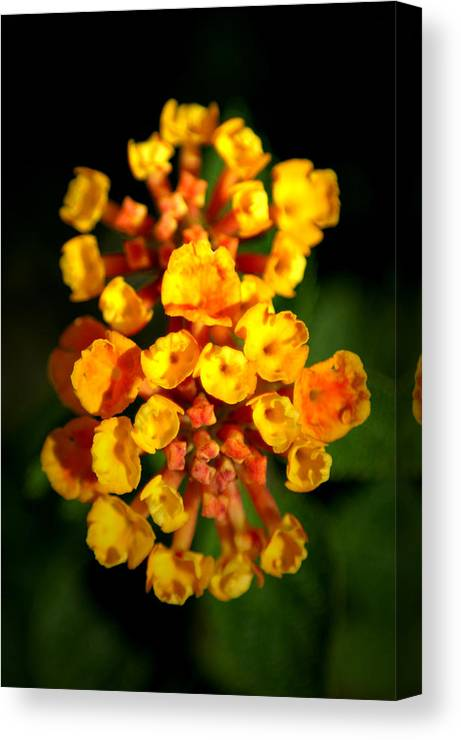 Flower Canvas Print featuring the photograph Horn Section by David Weeks