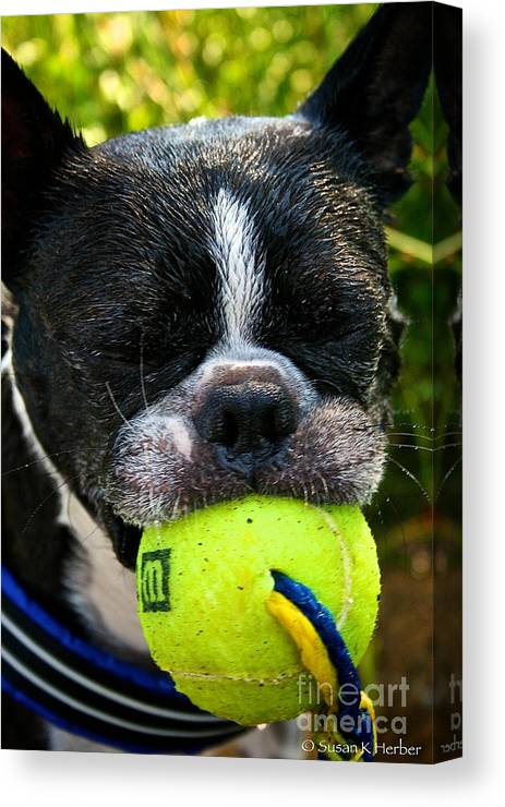 Pet Canvas Print featuring the photograph Last Laugh by Susan Herber
