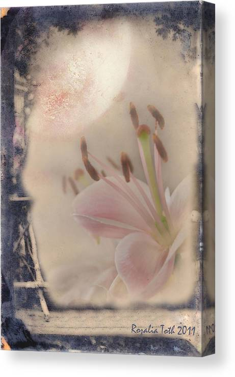 Moon Canvas Print featuring the mixed media Lily In The Moonlight by Rozalia Toth