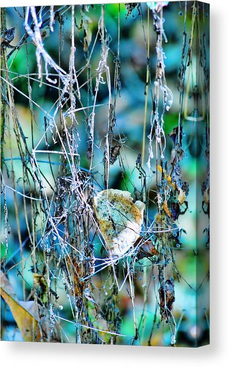 Forest Canvas Print featuring the photograph Natural Abstract by Bonnie Bruno
