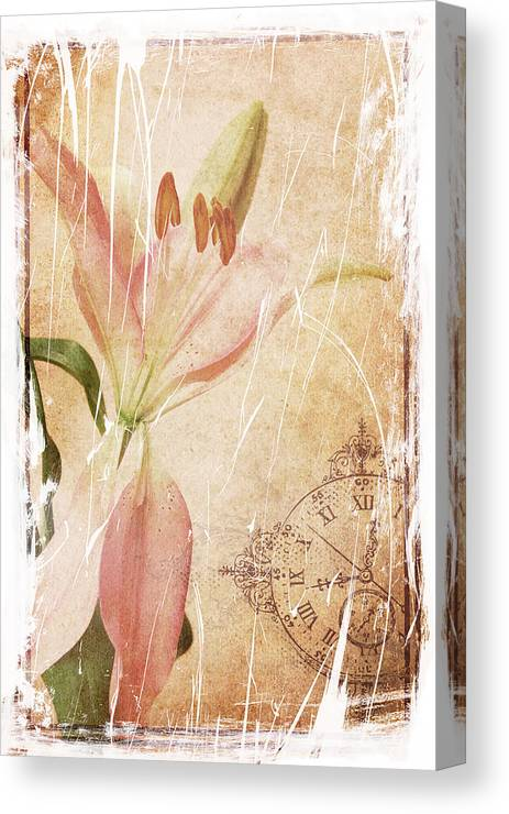 Lily Canvas Print featuring the photograph Old Greating Card by Rozalia Toth