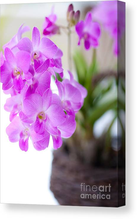 Backgrounds Canvas Print featuring the photograph Purple Mini Orchids by Juriah Mosin