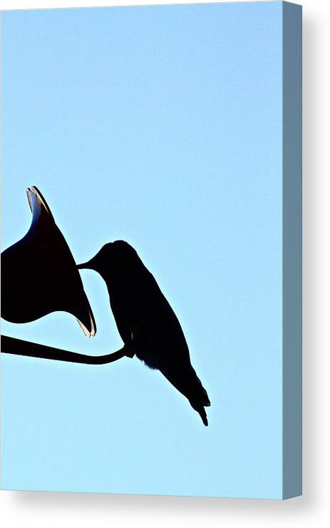 Birds Canvas Print featuring the photograph Silhouette by Diana Hatcher