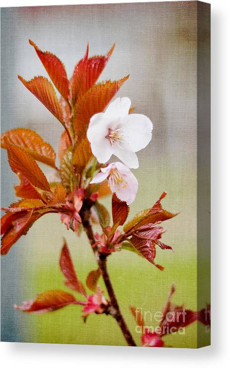 Nature Canvas Print featuring the photograph Spring Bloom by Violet Gray