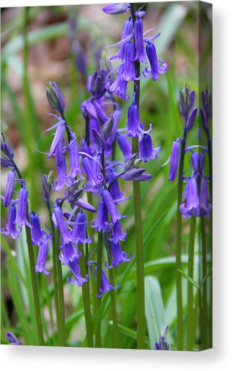 Ed Lukas Canvas Print featuring the photograph Spring Blue by Ed Lukas