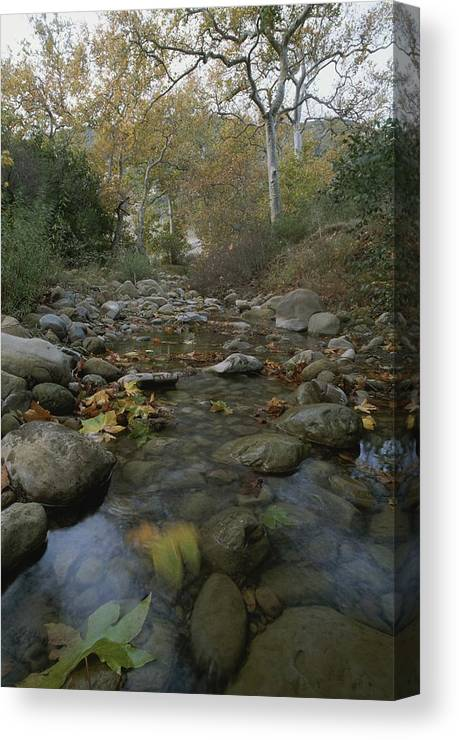North America Canvas Print featuring the photograph View Of The Arroyo Hondo Creek by Rich Reid